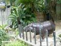 Pygmy Hippopotamus / Koyuri-Birthday!