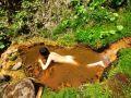 旭岳 天女の湯